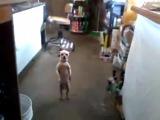 Самая смешная танцующая собака в мире